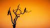20170726-137-Corroboree Billabong Sunset-Edit.jpg (Brian Dean) Tags: austgeo corroboreebillabongsunset caravaning slideshow beautynaturepending birds piedcormorant 2017tour flickr nt
