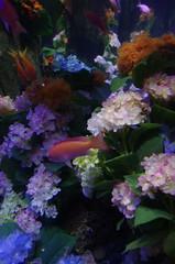 Hydrangea Aquarium (PBY) Tags: enoshima japan kanagawaken katasekaigan topflickr geo:lat=3530995600 geo:lon=13947958400 geotagged imgp0529jpg jpn
