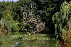 by the secret pond (photos4dreams) Tags: gersprenz06082017p4d gersprenz münster hessen germany naturschutz nabu naturschutzgebiet photos4dreams p4d photos4dreamz nature river bach flus naherholung