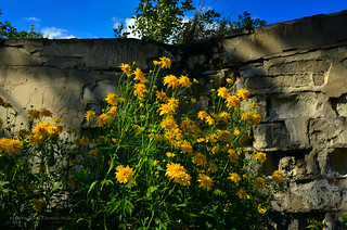 Flowers & old wall