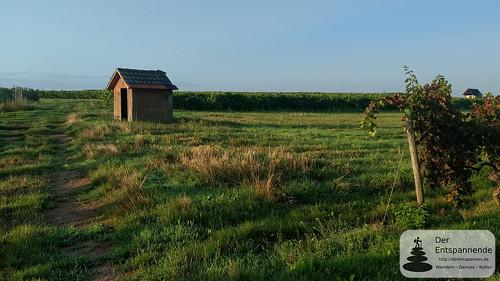 Weinbergshäuschen - SunriseRun über dem Selztal