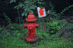 Informative (iannuccisarah) Tags: fire hydrant sign obvious funny humor green greenery woods forest country red color saturation