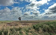 August (Wunderlich, Olga) Tags: himmel wolken rügen insel mecklenburgvorpommern deu gras wind baum zaun landschaft