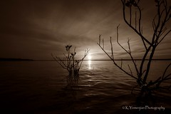 Dramatic Sunset! (K.Yemenjian Photography) Tags: dslr lake georgia clarkshill clarkshilllake water waves sun sunlight sunbeam reflection dramatic canont5i canon landscape island southeast sunset sepia t5i 700d canon700d placescity