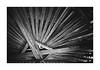 Wood Lines (Oeil de chat) Tags: nb bw monochrome film argentique pellicule canon a1 ilford fp4 lignes abstrait charpente fuite bois