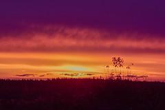 Fire on the Prairie (Margo Dolan) Tags: