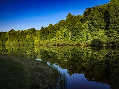 The Trees in Line (Randall ]|[ Photography) Tags: usa unitedstates us burlington lakemackintoshpark park mackintosh landscape waterscape amazing awesome beautiful calm reflection reflecting grass sky blue green northcarolina nc lake outdoors outdoor river water trees tree