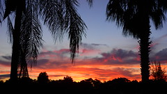 September's First Sunrise (Jim Mullhaupt) Tags: sunrise sunup dawn sun morning sky clouds color red orange pink yellow blue tree palm silhouette weather tropical exotic wallpaper landscape bradenton florida manateecounty nikon coolpix p900 jimmullhaupt photo flickr geographic picture pictures camera snapshot photography nikoncoolpixp900 nikonp900 coolpixp900