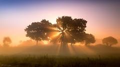 Narew (figoosia) Tags: narew natura mgła fog drzewa tree sunrise wschódsłońca podlasie poland landscape b