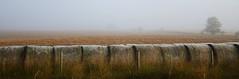 Alberta Landscape (Kelly - McLaughlin) Tags: alberta agriculture canada farm field fog bales tree horizon landscape foggylandscape