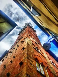 Torre del Guinigi