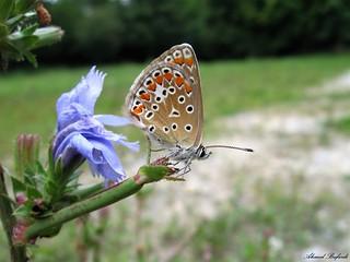 Butterfly 1409
