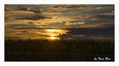 SHF_6124_Sunset on Ottawa, Ontario, Canana (Tuan Râu) Tags: 1dmarkiii 14mm 100mm 135mm 1d 1dx 2470mm 2017 50mm 70200mm tuấnrâu2017 canon canon1d canoneos1dmarkiii canoneos1dx sunset hoànghôn ottawa ontario canada tuanrau tuan râu httpswwwfacebookcomrautuan71