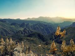 Gran Canaria (bh-fotografie) Tags: gran canaria 12100 olympus canarian islands march märz 2017 mft microfourthirds m43