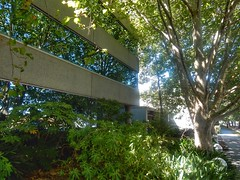 Building in disguise (sander_sloots) Tags: office building williamstown melbourne trees plane architecture modernist kantoorgebouw bomen platanen modernisme