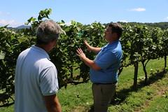 File451 (UGA CAES/Extension) Tags: grapes ugaextension cranecreekvineyards wine viticultureteam viticulture northgeorgiavineyards vineyards vines georgiawine uga