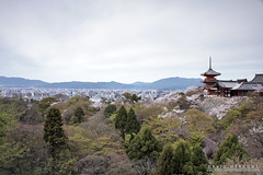 View To Kyoto (DMeadows) Tags: kiyomizudera temple dmeadows davidmeadows japan japanese asia asian holiday vacation tour tourism travel trip visit culture cherry blossom sakura kyoto