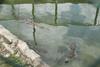 matanzas-7.jpg (BradPerkins) Tags: crocodilefarm crocodile cuba animals