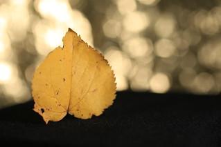 Herald of autumn‽ (golden bubble bokeh)