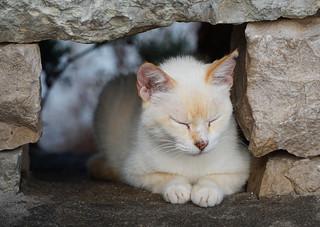 Mallorca cat