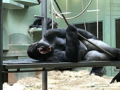 (joyce.kerssens) Tags: diergaarde zoo blijdorp bokito