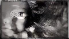 Doll's eye(s)-11474 (Poetic Medium) Tags: dollparts stilllife blackandwhite snapseed blender ipod doll toy
