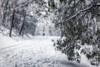 Walking in a winter wonderland (RissaJT_23) Tags: snow winter wonderland winterwonderland cold snowtrees blizzard snowflakes mountdonnabuang australianlandscape australianalps warburton canon6d canon canoneos6d canon24105mm weather coldweather songlyrics
