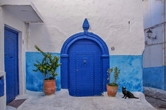 13 (u c c r o w) Tags: morocco rabat blue street streetlife black cat tree door wall citylife urban urbanlife animal pot africa african arab arabian