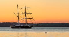 _DSC5008.jpg (David Hamments) Tags: australia sunset dolphin schooner nelsonbayharbour nsw