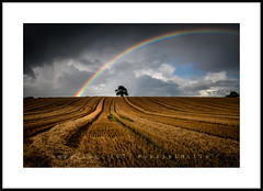 Richard Of York..... (RonnieLMills) Tags: red orange yellow green blue indigo violet richardofyorkgavebattleinvain rainbow colours arc barley field rows straw lone tree ballystockart road gransha