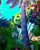 (Vipi Villa) Tags: flowers bluesky tropical naturelover sunrays holiday landscape vacations trip instapic tflers mytravelgram traveling travelgram instago instagood instatraveling beautifuldestinations wonderfulplaces greatshot bestoftheday bestphotogram picoftheday worldwide worldplaces worldcaptures beautifulworld worlderlust watamu flowerstagram
