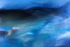 sometimes (kceuppens) Tags: nikond810 nikon d810 nikkor24120f4vr 24120 fish vissen vis zwemmen aquarium spain spanje sansebastian longexposure le blur motion beweging wazig explore inexplore water movement swim zwem swimming