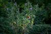 flutterby (severalsnakes) Tags: kansas pentax rokinon8514 saraspaedy shawnee shawneemissionpark k1 manualfocus