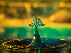 Green Mushroom (Laith Stevens Photography) Tags: water waterdrop strobist strobe flash freeze motion olympus omd olympusinspired omdem1 olympusomd olympusau orange omdem1mkii 60mmf28 macro green getolympus glass goneawol bokeh beautiful tabletop collisions plutotrigger pluto valve colour gels rogue grid godox tt685c studio ngc nofilter flickr olympusaustralia longexposure