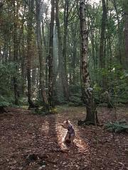 The sun shines on the righteous (katy1279) Tags: sunbeamsunshineautumntreeswoodlandyorkshireterrieryorkiecutedog smileonsaturday treesinthepicture