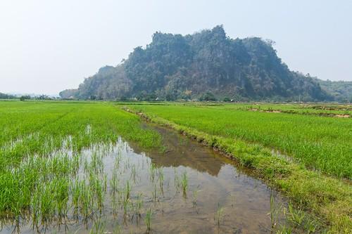 mae fah luang - thailande 48