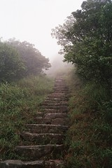 Lantau Staircase (LeeDylanLeeDyl) Tags: hong kong lantau peak olympus xa2 foggy fog mist misty mountain hill staircase steps spooky scary horror film 35mm