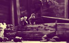 Nosferatu (RK*Pictures) Tags: nosferatu vampire blood rats rat teeth death aztechtoys silentscreamers silentfilm black blackandwhite expressionism expressionist maxschreck friedrichwilhelmmurnau murnau germany 1922 orlok countorlok horror horrormovie terror toy ship countdracula bramstoker dracula diorama adaptation transylvania novel actionfigure vessel fog plague demeter schooner germanexpressionist coffin darkness asymphonyofhorror wife woman panic supernatural fear dark evil sunrise night rkpictures toyphotography actionfigurephotography claws fingernails fingers hand monochrome