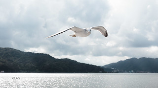 Bird at Amanohashidate
