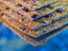 Crisp & fancy (Karsten Gieselmann) Tags: blau braun em5markii mzuiko macromondays makro microfourthirds olympus ring schmuck blue brown jewelry kgiesel m43 mft bread