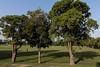 0F1A1581 (Liaqat Ali Vance) Tags: nature trees people gulshan iqbal park google lahore liaqat ali vance photography punjab pakistan