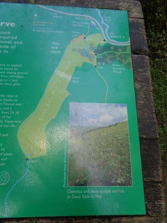 Deep Dale Nature Reserve, Derbyshire