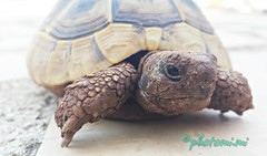 Tartaruga* (pryrkjyr60) Tags: animal animali rettili tartaruga tartle tartarughediterra photo natura natur