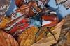 圓翅鍬形蟲(學名:Neolucanus doro Mizunuma) (JamesHou168) Tags: 光澤 紅圓 甲蟲,露水,草,月,雨,雄鹿,美麗,強大,有角,大,長,保護,年輕,壯觀,鬍鬚,露水,角,鞘翅目,宏觀,自然,棕色,男性,最大,葉,恐怖,甲蟲,台灣,昆蟲,綠色,昆蟲學,生物圈,少beetle red round wings grass month rain stag beauty powerfulowl horned large long protection youngadult majestic mustache dew windinstrument jewelbeetle macrophotography nature brown maleanimal biggest leaving horror taiwan insect green bioreserve learning