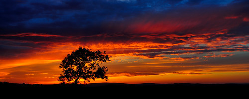 Tree of fire by