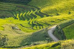 _29A0171.0817.Phiêng Ban.Bắc Yên.Sơn La. (hoanglongphoto) Tags: asia asian vietnam northvietnam northwestvietnam landscape scenery vietnamlandscape viernamscenery vietnamscene mountainouslandscape mountainous hill hillside flankmountain afternoon sunny sunlight sunnyafternoon sunnyweather road pass canon canoneos5dsr tâybắc sơnla bắcyên phiêngban tàxùa phongcảnh phongcảnhvùngnúi phongcảnhtâybắc buổichiều nắng nắngchiều sườnnúi sườnđồi valley thunglũng đườngđi đèo roadpics conđường canonef70200mmf28lisiiusmlens sundaylights