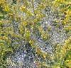 Trentino 2017 (themancos) Tags: trentino pontearche rugiada ragnatela dewdrops cobweb spidersweb dew italy nature natura ragno spider