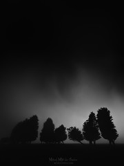 Dark ages (Mimadeo) Tags: mysterious scary dark fog night forest fear horror mood atmosphere moonlight landscape tree evening nature mystery mist spooky foggy darkness misty woods creepy fantasy gothic surreal silhouette enchanted ghost black white blackandwhite cypress copyspace moody