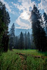2017Seki-267-HDR (chenhengyu) Tags: 20170901 crystalcave kingcanyonnationalpark labourday longweekend rv seki sequoianationalpark sequoiatree