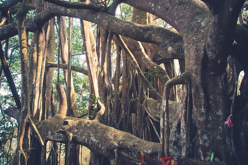 ramkhamhaeng national park - thailande 26